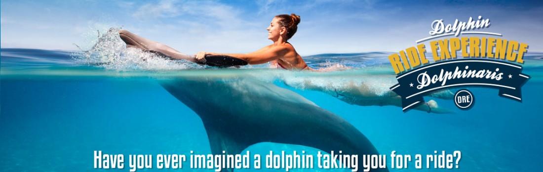 Dolphin Ride Experience