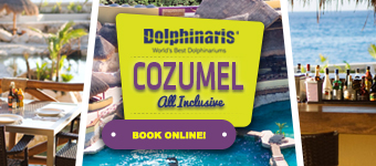 Swimming with dolphins in Cozumel Mexico plus unlimited meals and drinks