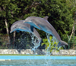 Swimming with dolphins reviews in Cancun, Riviera-Maya, Tulum and Cozumel