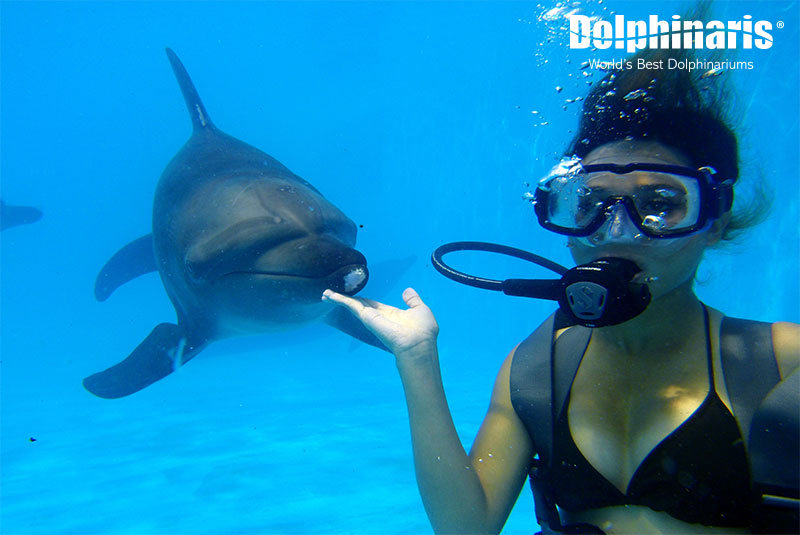 Swimming with dolphins is an unforgettable experience!