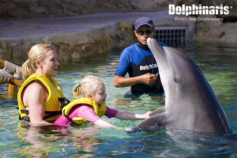 Familia interactuando con delfines.