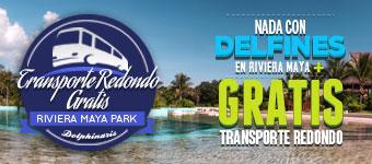 Reserva tu nado con delfines en Riviera Maya y obtén transportación redonda gratis.