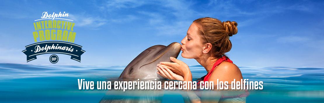 Nadar con delfines - Ahorra hasta un 50% en reservas anticipadas.
