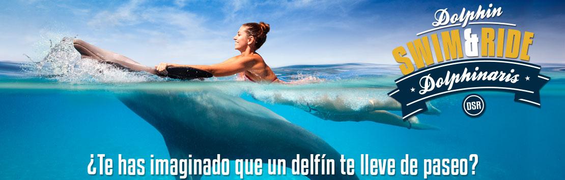 Programa de nado y paseo con delfines en Cancún, Riviera Maya, Barceló y Tulum.