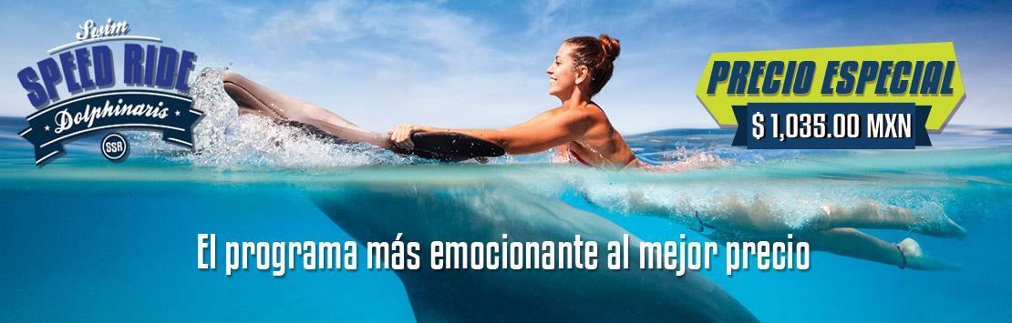 Precio especial -Programa de nado con delfines - Swim Speed Ride