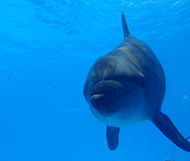 Dolphinaris reviews - Tripadvisor - swimming with Dolphins