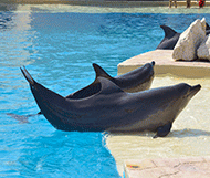 Dolphinaris reviews - Tripavisor - Spend more time with the Dolphins