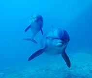 Dolphinaris reviews - Tripavisor - Swim with Dolphins great experience