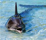 Opiniones de Nado con delfines en Tripadvisor