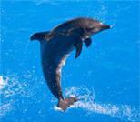 Reseñas en tripadvisor de Nado con delfines.