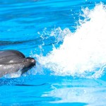 dolphin-facts-dolphinaris-playing