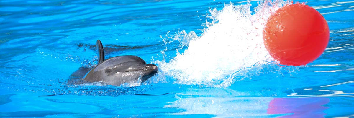 Conservation & Facts | Dolphinaris.com