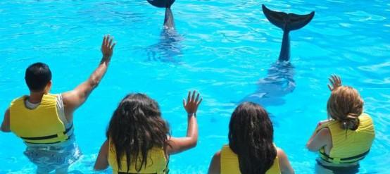 En Dolphinaris disfrutarás de los mejores nados con delfines.