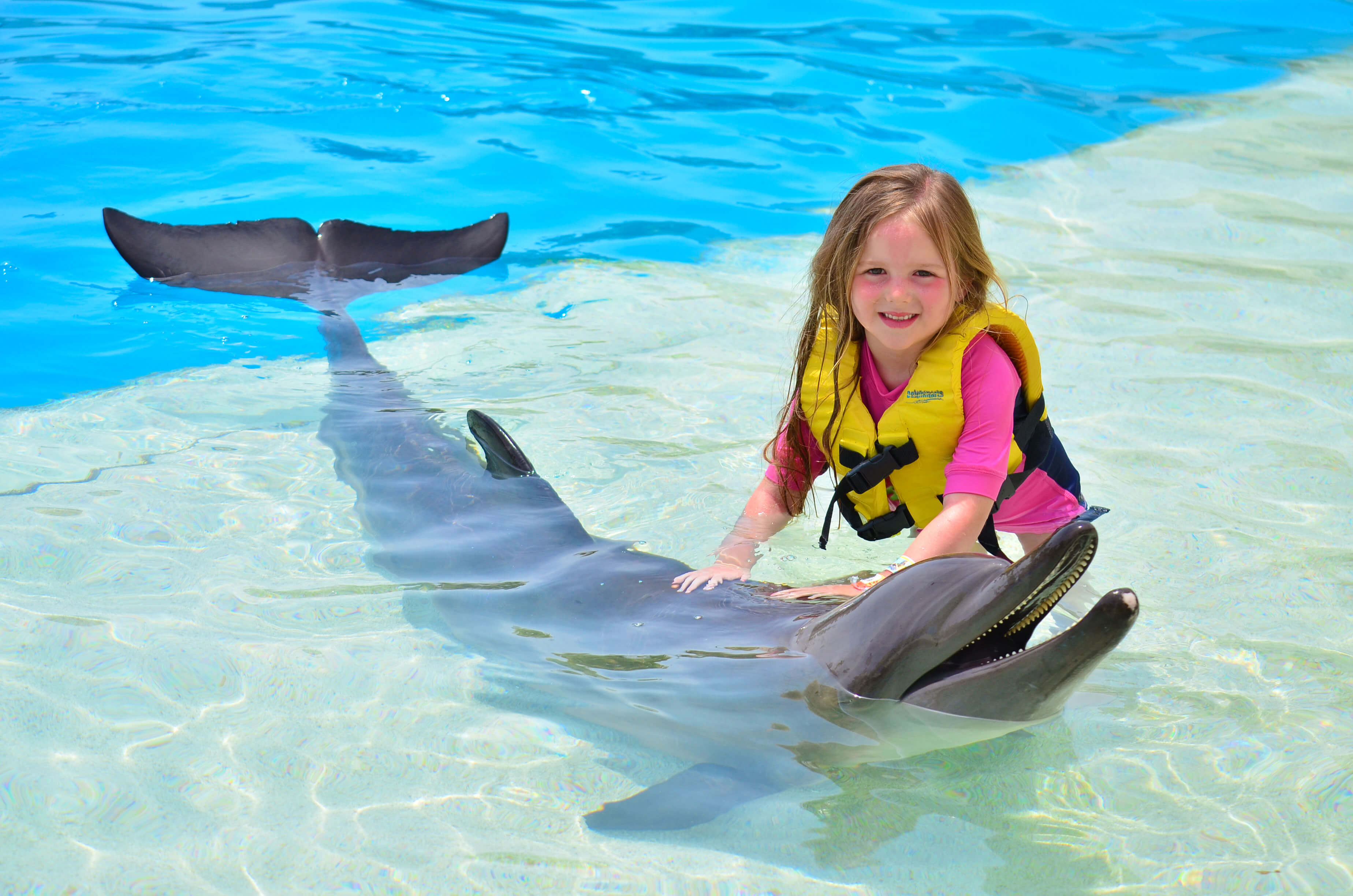 Swim with dolphins for non swimmers and kids dolphinaris amazing dolphin encounter voltagebd Images