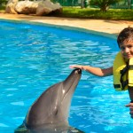 Kids dolphin interaction