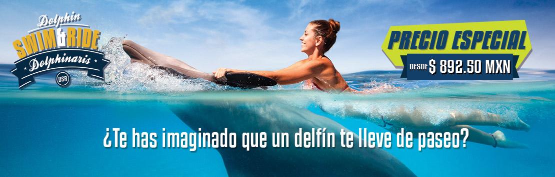 Programa de nado con delfines - Dolphin Swim & Ride