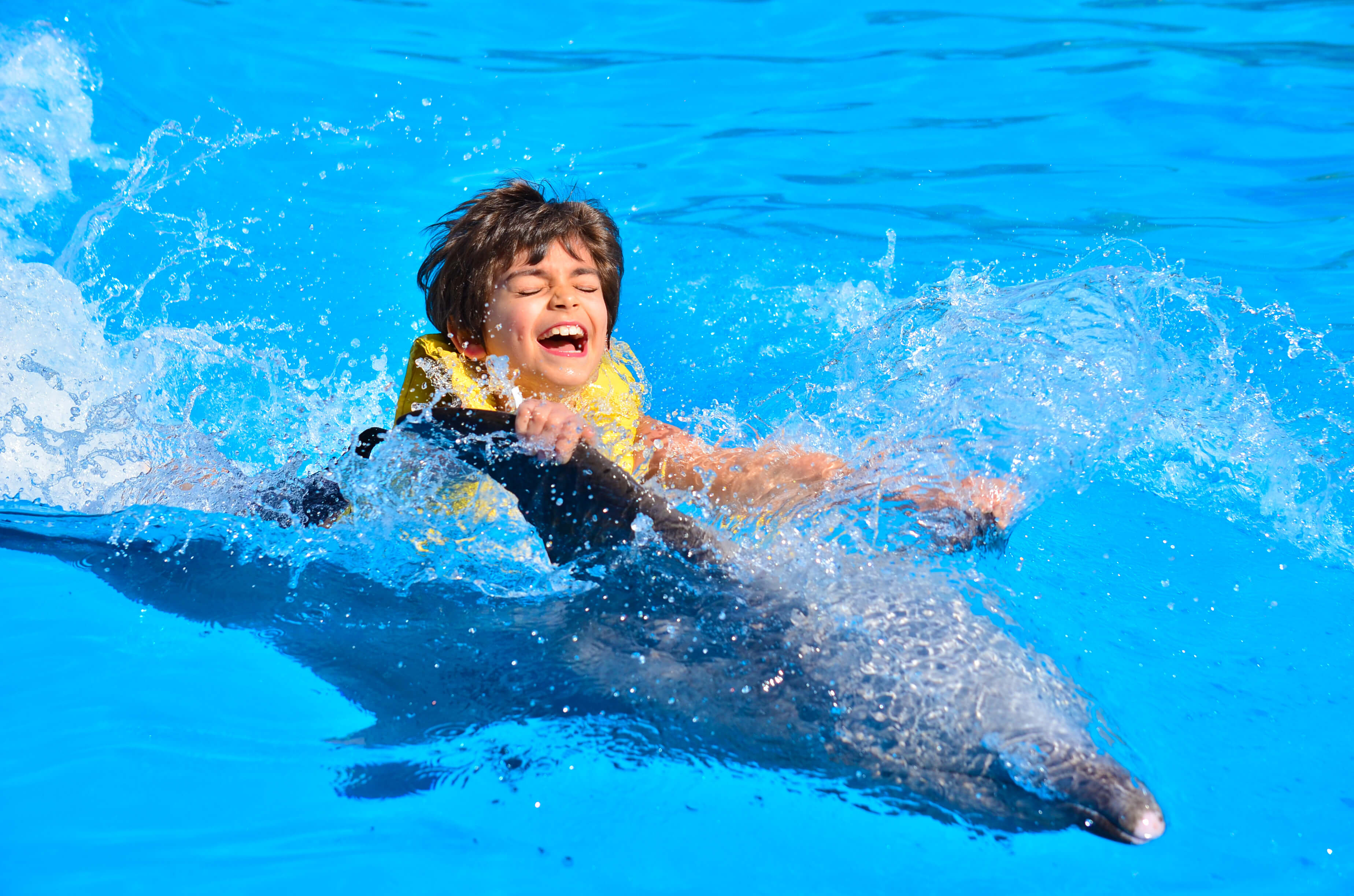 swim and ride with the dolphins at dolphinaris