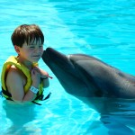 Programa interativo com golfinhos