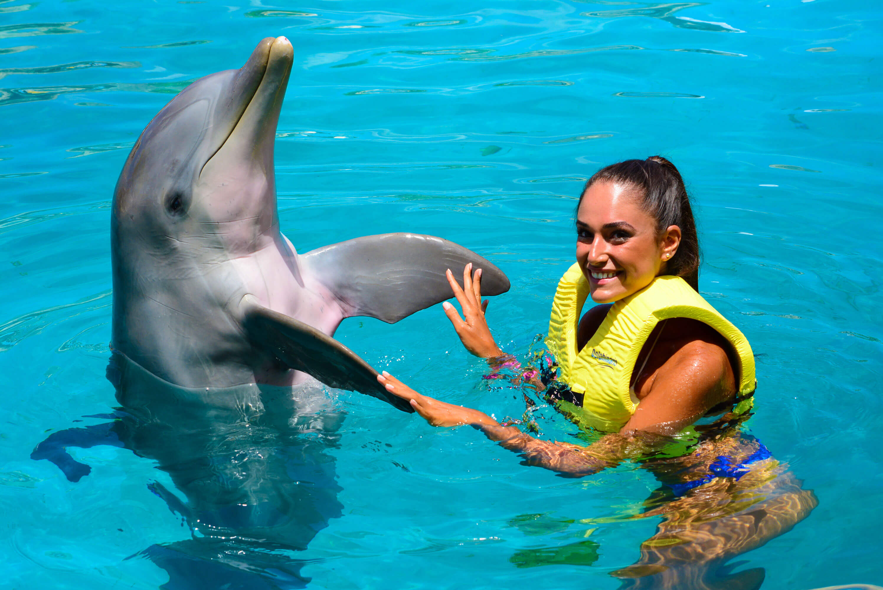 Dolphin Trainer Program