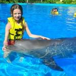 Interagir com o golfinho