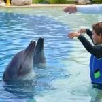 Maravillosa interacción con delfines