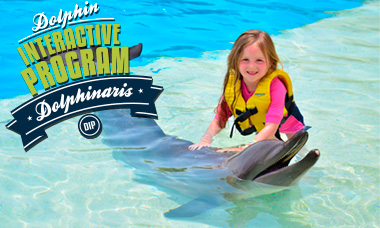 Swim with dolphins in Cancun - Dolphin Interactive Program
