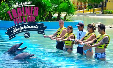 Swim with dolphins in Riviera Maya - Trainer For a Day