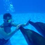 Treinador de golfinhos por um dia