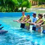 Treinador de golfinhos