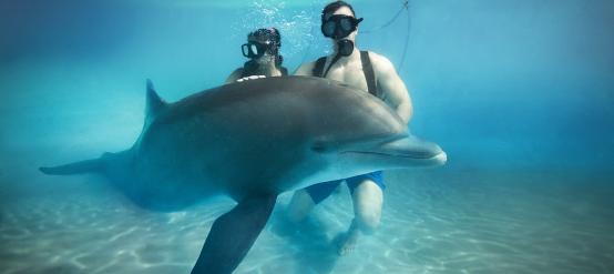 Los delfines y sus nados son algo para no perderse.