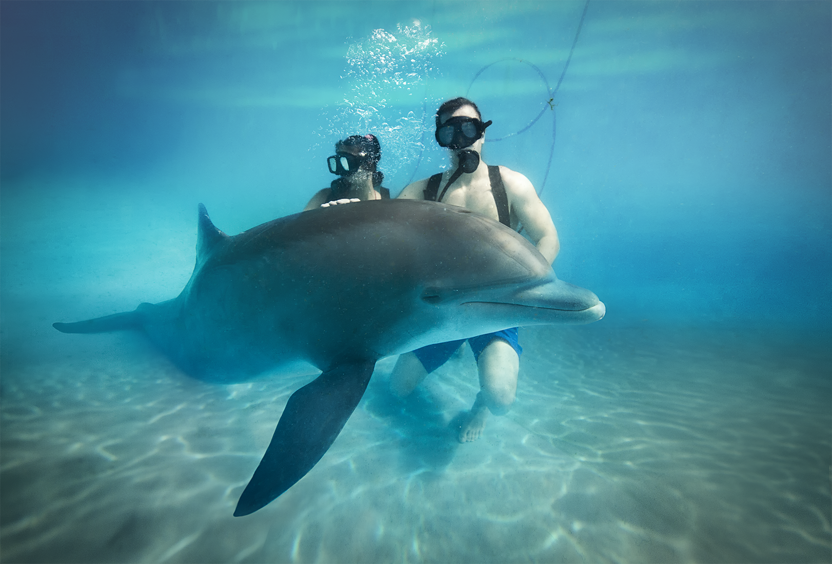 Swim with dolphins Cancun