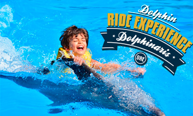Swim with dolphins in Cozumel - Dolphin Ride Experience - Belly Ride