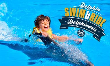 Nadar con delfines en Cancún - Dolphin Swim & Ride - Belly Ride