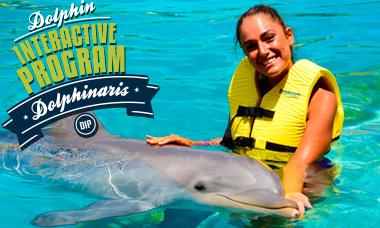 Nadar con delfines en Cozumel - Encuentro interactivo con delfines.