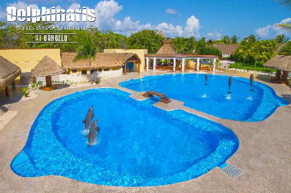 15 mejores lugares para nadar con delfines en el mundo [dolphinaris-barcelo]