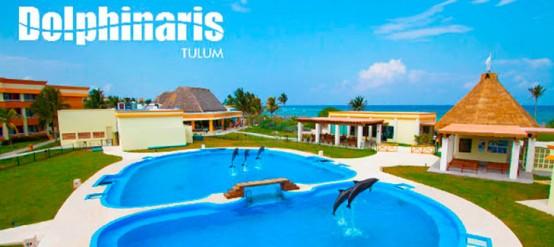 15 mejores lugares para nadar con delfines en el mundo