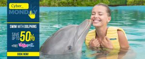 Cyber Monday- Swimming with dolphins in Cancun and Riviera Maya