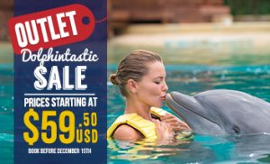 Online Outlet Deals swimming with dolphins Cancun and Riviera Maya