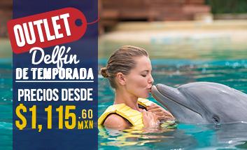 Delfín de Temporada - Outlet Nado con Delfines en Cancún