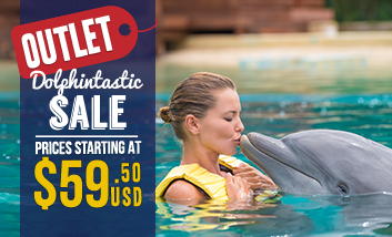 Dolphintastic Sale! - Swim With Dolphins in Cancun & Riviera Maya
