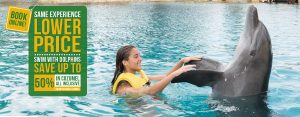 Swim With Dolphins in Cozumel - All Inclusive Experience