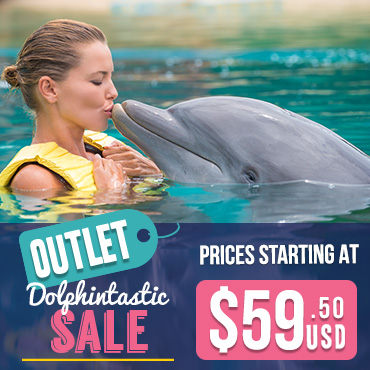 Dolphintastic Sale Spring Break Swimming with Ddolphins