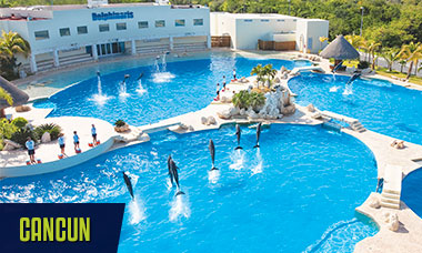 Summer break deals all swim with dolphins in Cancun + free Wet'n Wild