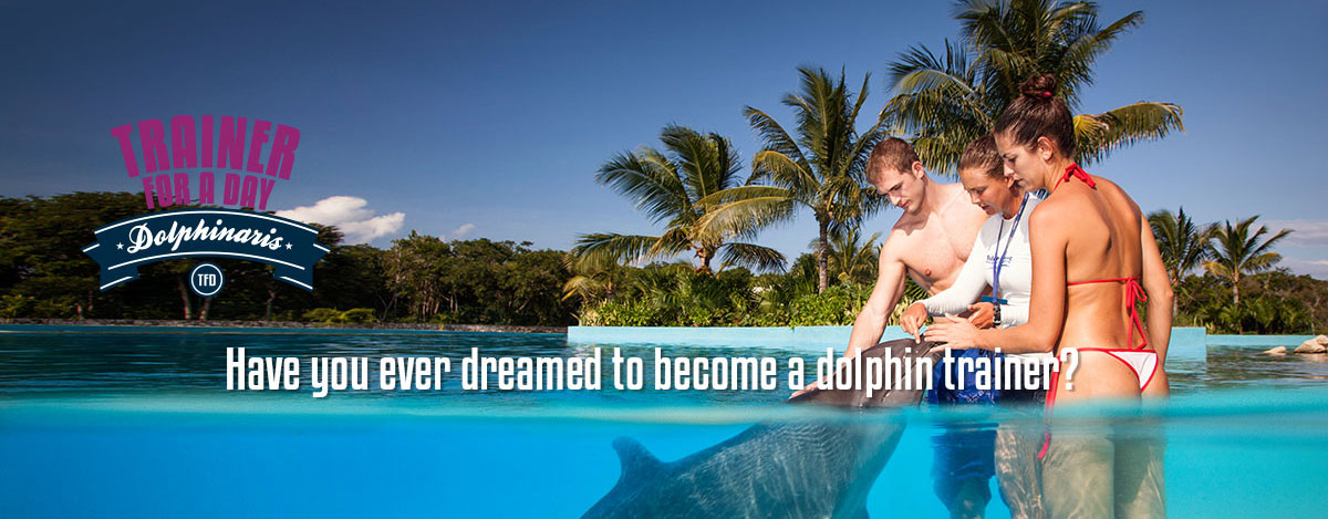 Become one of our dolphin trainers for a day!