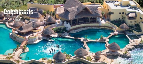 Visit the island of Cozumel in Mexico to swim with dolphins.