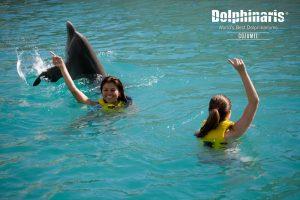 Actividades con delfines visita Cozumel pronto