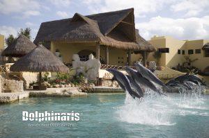 delfines saltando en dolphinaris cozumel