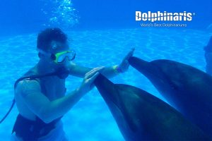 Trainer for a Day en Dolphinaris Riviera Maya Park