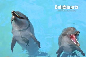 Swim with dolphins in Dolphinaris Riviera Maya Park