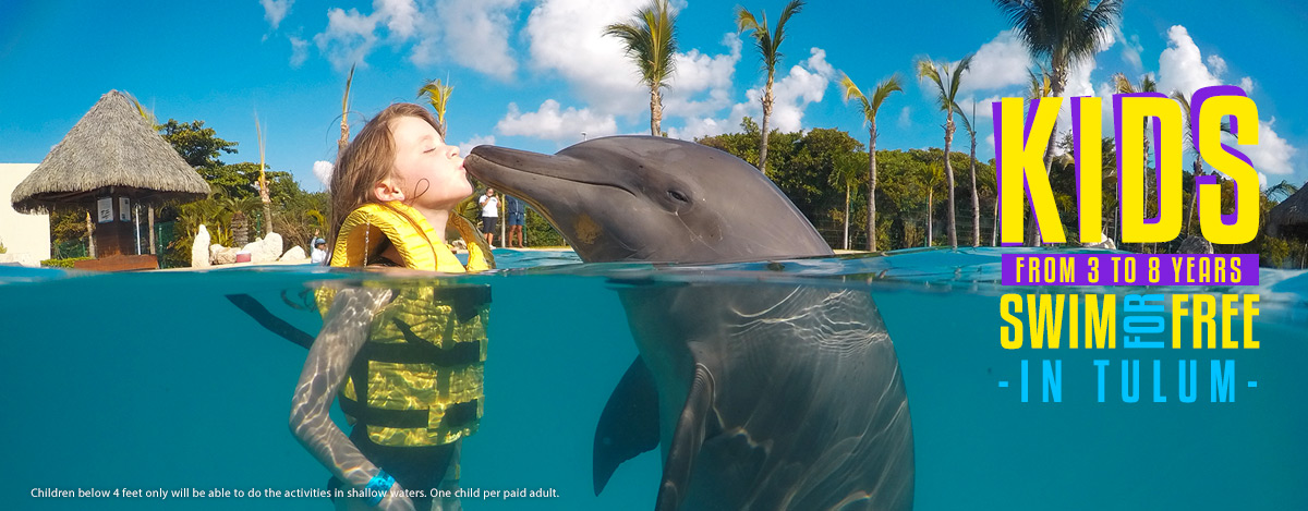 swimming with dolphins in tulum dolphinaris